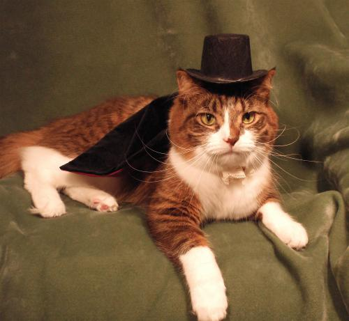 cat-tophat