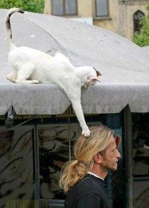 cat_attack1