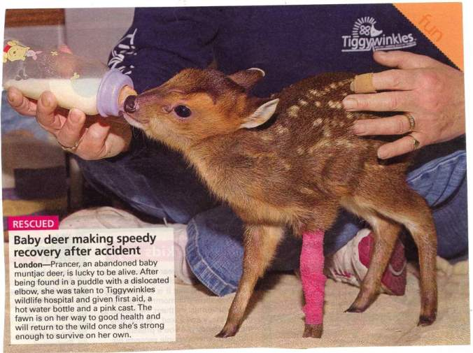 cute-baby-deer1