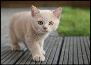 cute-orange-cat