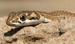 cute-snake