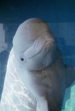 cute-whale