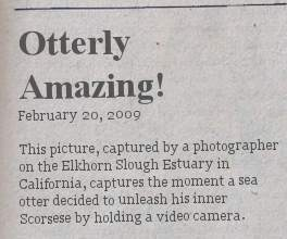 otterly-amazing