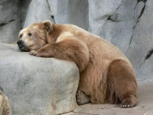 sad_bear_500