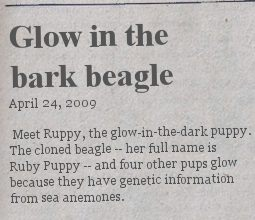 glow-in-the-bark