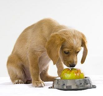 apple dog