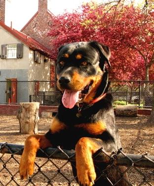 prospect park dog