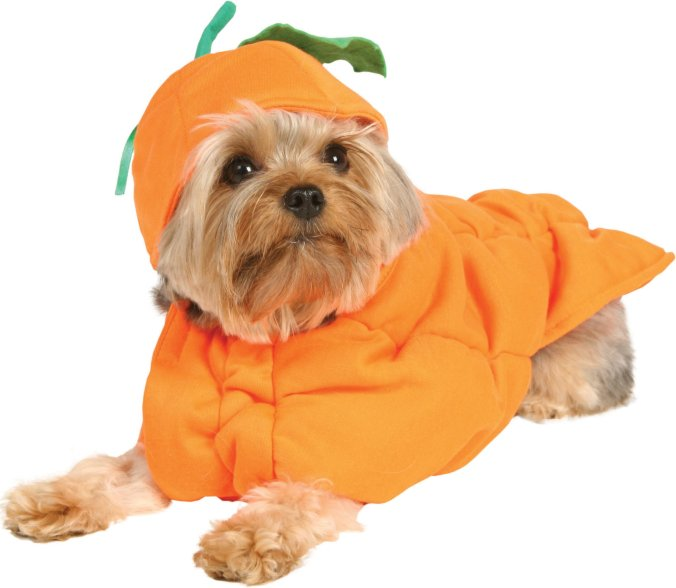 pumpkin dog