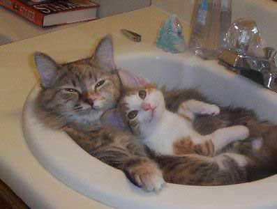 kitten sink