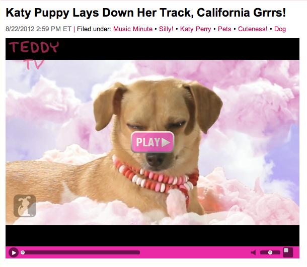 Image of: Hilarious Katy Puppy Twitter Catastrophe Bad Animal Punsu2026 Dot Com
